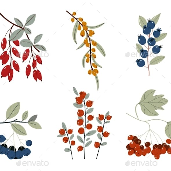 Collection of Design Floral Elements