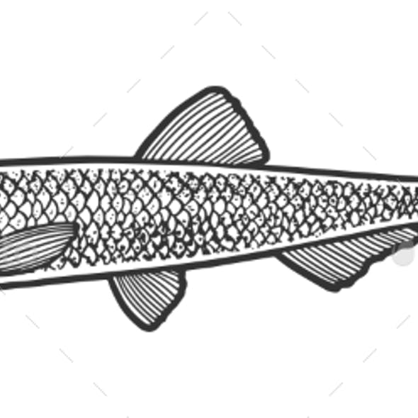 Anchovy Fish Sketch Vector Illustration