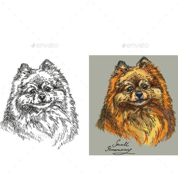 Small Pomeranian in color and black and white