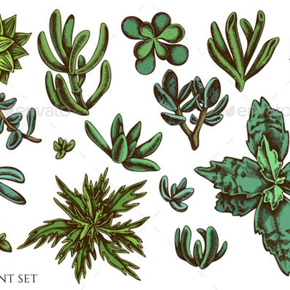 Vector Set of Hand Drawn Colored Succulent