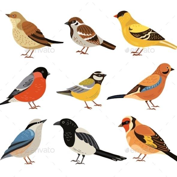 Winter Birds. Isolated Wild Bird, Cartoon