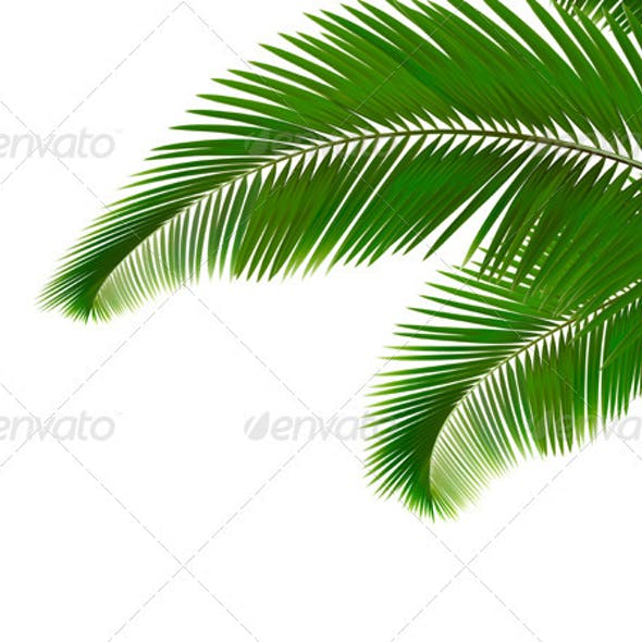 Palm leaves on white background.  Vector