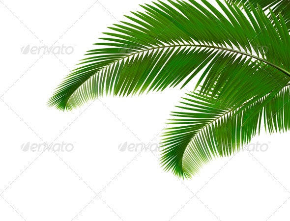 Palm leaves on white background.  Vector  - Flowers & Plants Nature