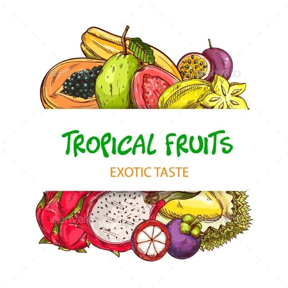 Exotic Tropical Fruits Sketch Vector Banner