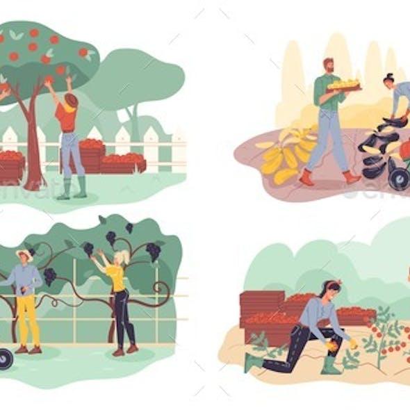 Farmer Gathering Fruit, Berry, Veggie Harvest Set