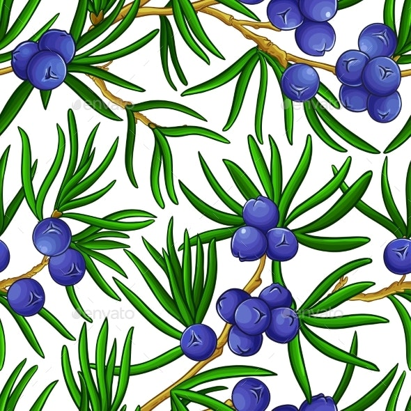 Juniper Branches Vector Pattern - Food Objects