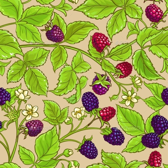 Borago Plant Vector Pattern on Color Background - Food Objects