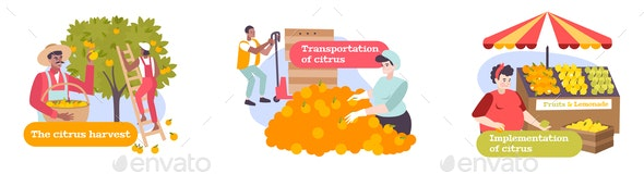 Citrus Flat Compositions - Miscellaneous Vectors
