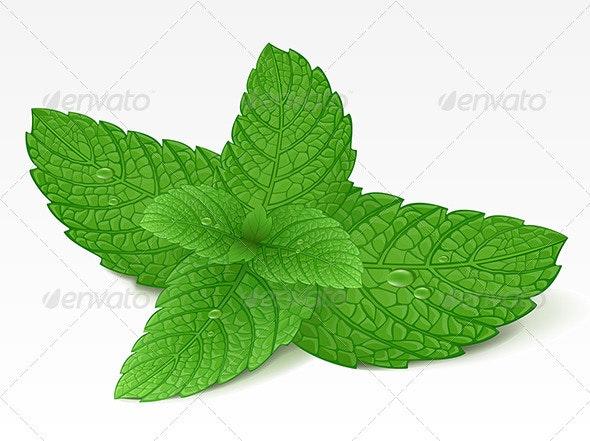 Mint leaf  - Food Objects