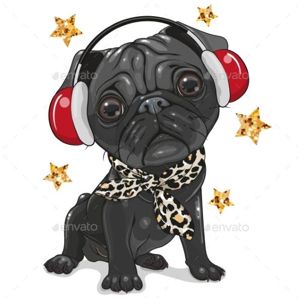 Black Pug Dog with Headphones on a White