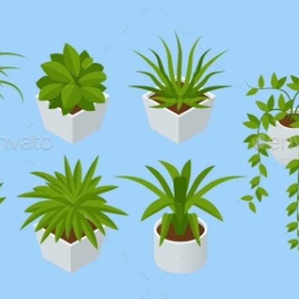 Isometric Set of Indoor Flowers Isolated