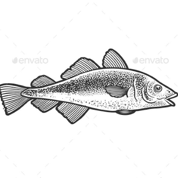 Atlantic Cod Fish Sketch Vector Illustration