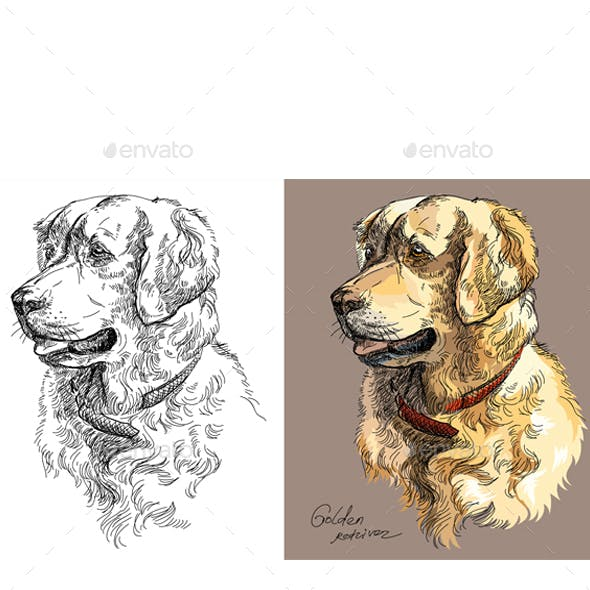 Vector Golden retriever in color and black and white