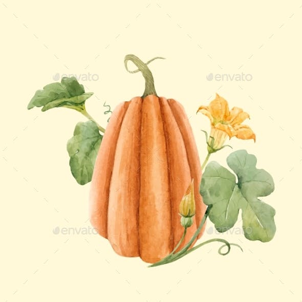 Vector Stock Illustration with hand drawn watercolor pumpkin vegetable.