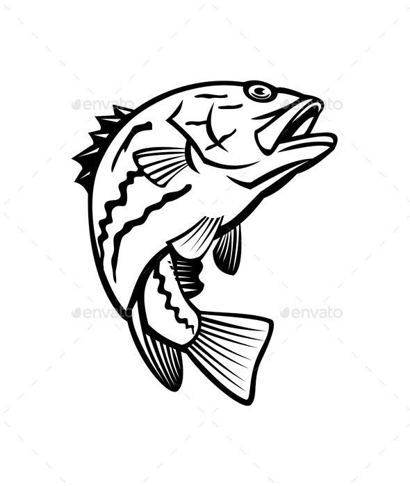 West Australian Dhufish Westralian Jewfish or West Australian Pearl Perch Jumping - Animals Characters