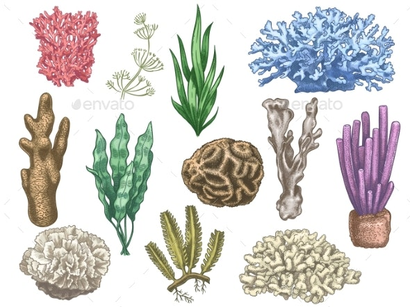 Hand Drawn Seaweeds and Corals. Sea Reef and - Miscellaneous Vectors