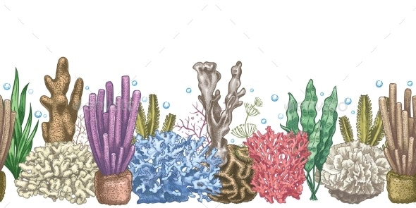 Seaweed Seamless Border. Sea Reef Weeds and Corals - Miscellaneous Vectors