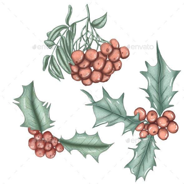 Cute Red Winter Berries,xmas