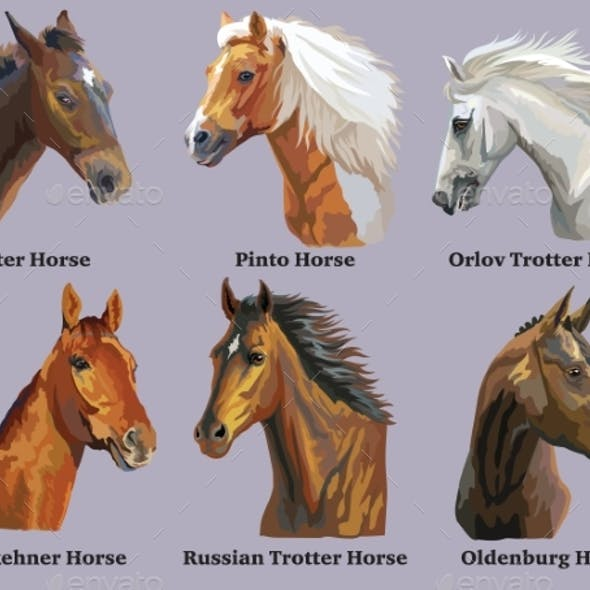 Set of Portraits of Horses Breeds 3