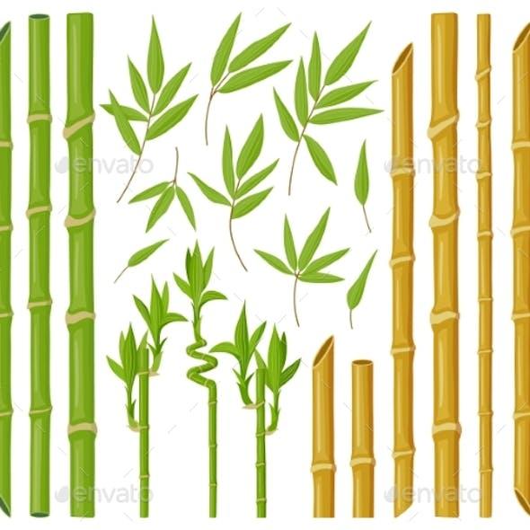 Cartoon Bamboo Plants. Asian Bamboo Stems, Stalks