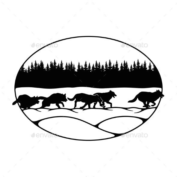Wolves, Wolf Pack - Forest Landscape, Wildlife