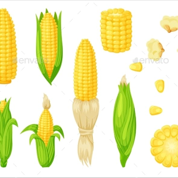 Vector Corn Set Isolated on White Background