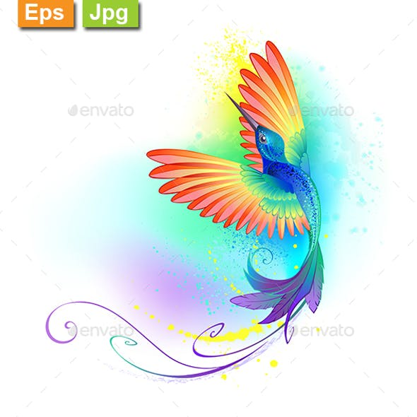 Splendid Rainbow Hummingbird