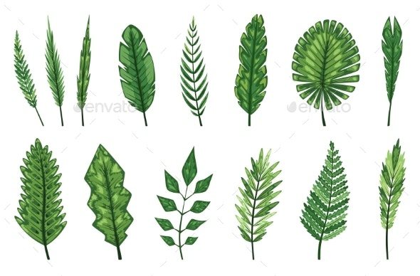 Collection of Tropical Abstract Green Isolated - Miscellaneous Vectors