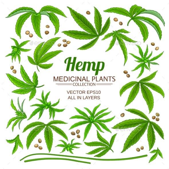 Hemp Plant Elements Set on White Background