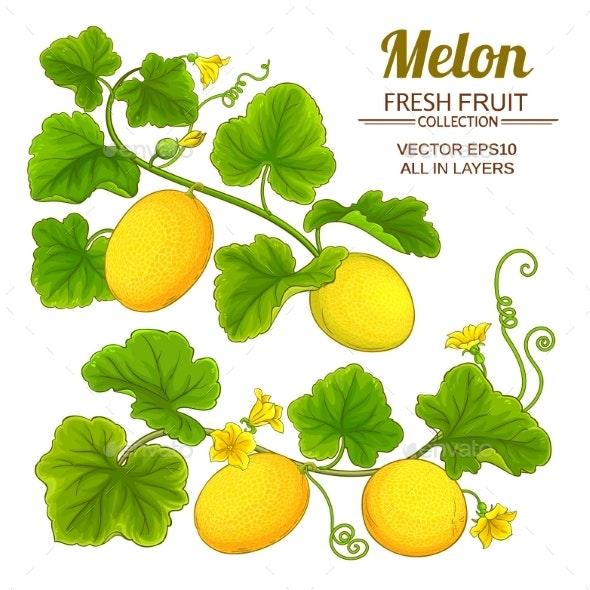 Melon Vector Set - Food Objects