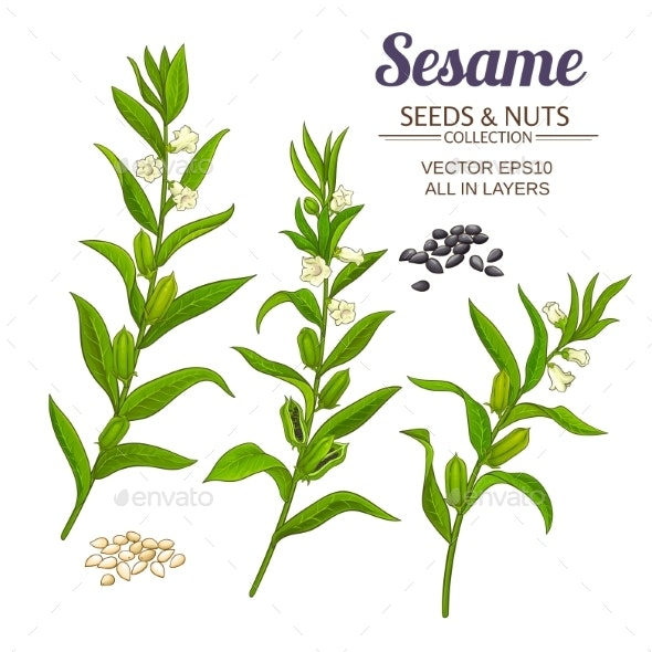 Sesame Vector Set - Food Objects