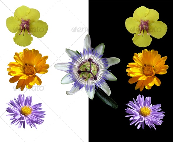 Four Isolated Wild Flowers