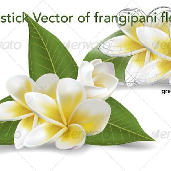 frangipani vector flowers