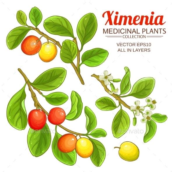 Ximenia Vector Set - Food Objects