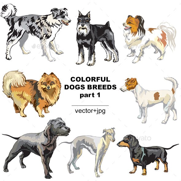 Colorful Dogs Breeds
