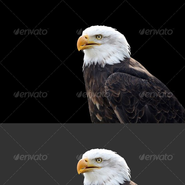 Eagle #3