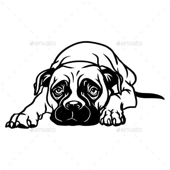 Boxer Dog  Lying Dog Vector Stock Isolated - Animals Characters