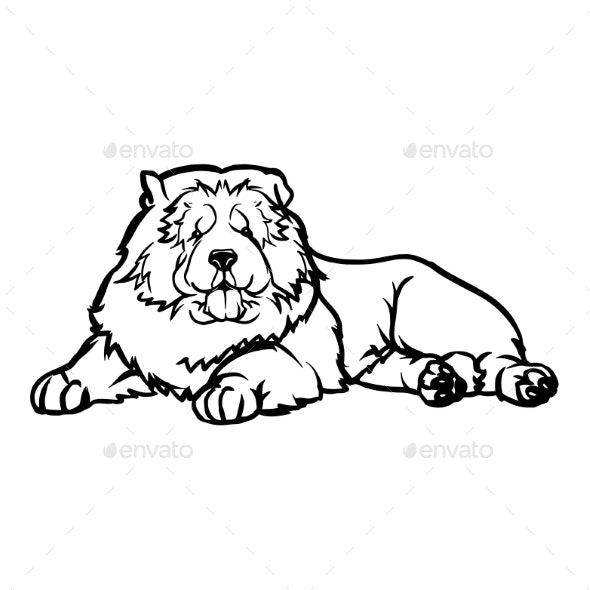 Chow Chow Dog  Lying Dog Vector Stock Isolated - Animals Characters
