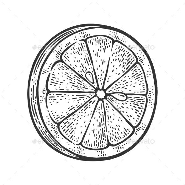 Lemon Slice Sketch Vector Illustration - Food Objects