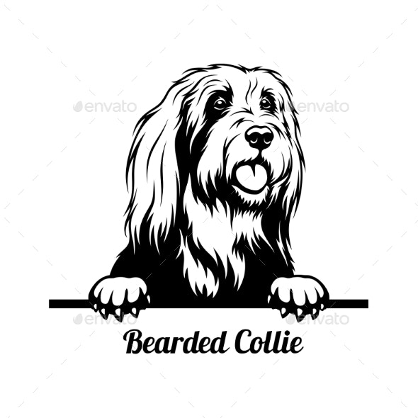 Peeking Dog  Bearded Collie Breed  Head Isolated - Animals Characters
