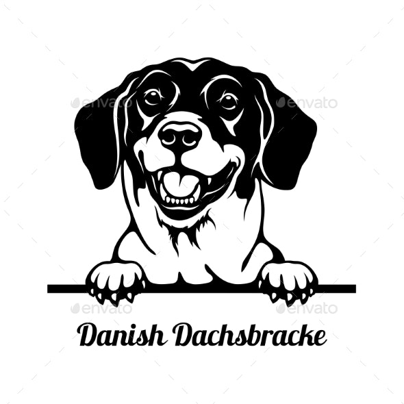 Peeking Dog  Danish Dachsbracke Breed  Head - Animals Characters