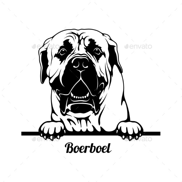 Peeking Dog  Boerboel Breed  Head Isolated on - Animals Characters