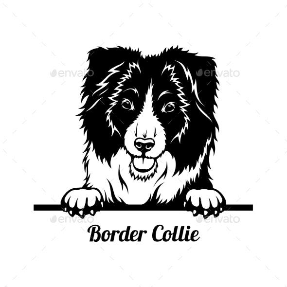 Peeking Dog  Border Collie Breed  Head Isolated - Animals Characters