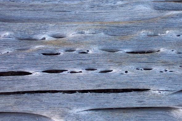 Cactus Ribs - Wood Textures