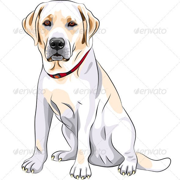 Vector Yellow Dog Breed Labrador Retriever
