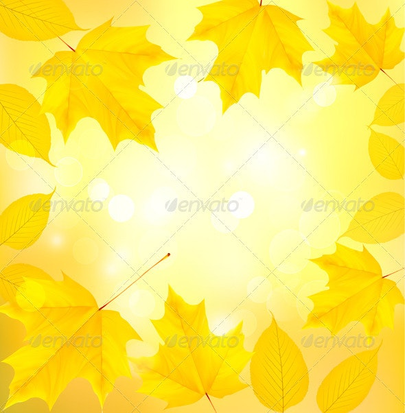 Autumn background with leaves  - Flowers & Plants Nature