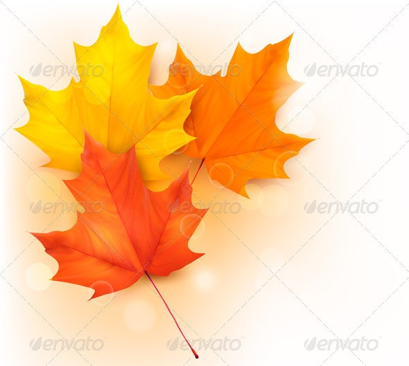 Autumn background with colorful leaves  - Flowers & Plants Nature