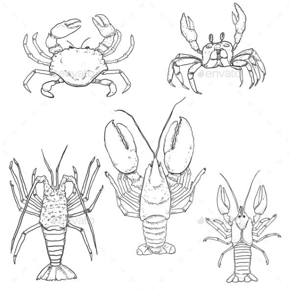 Vector Set of Sketch Sea Animals
