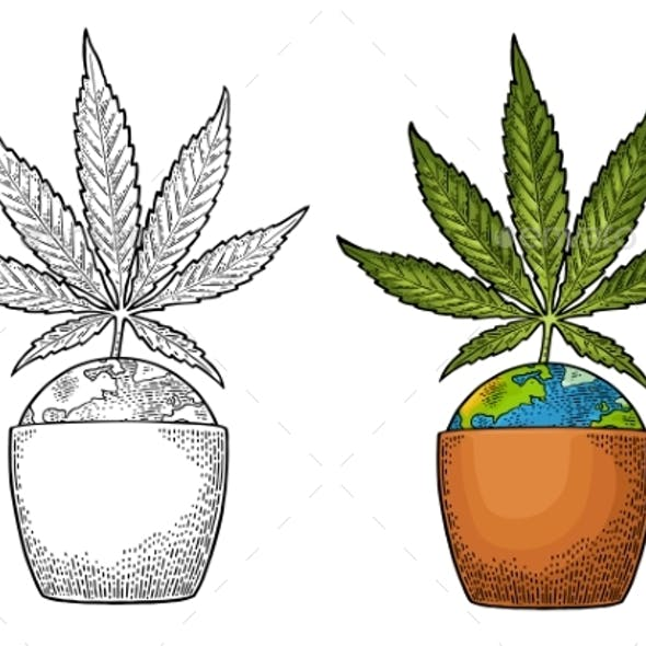 Marijuana Plant with Leaf in Pot