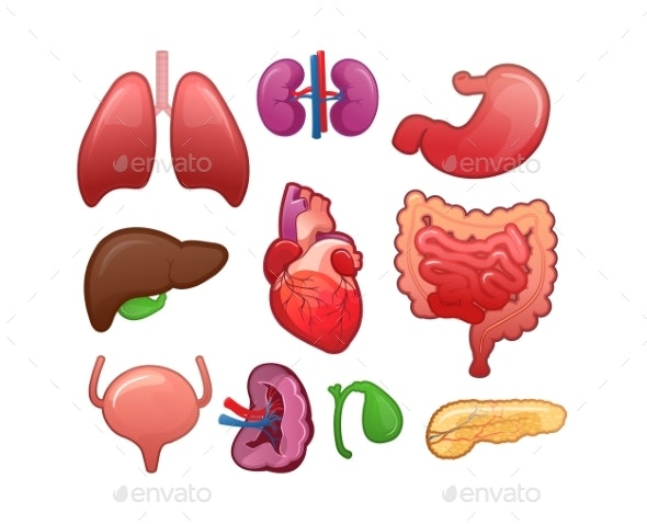 Set of Icons for Human Internal Organs - Health/Medicine Conceptual